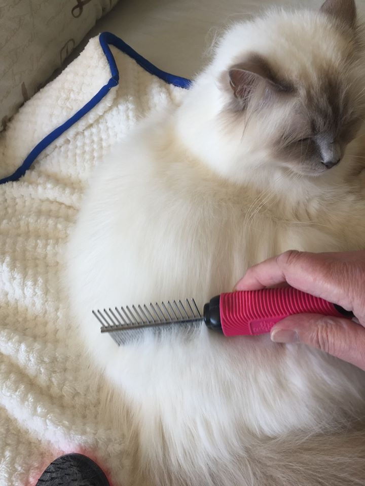 55498750 301868100493968 2621015191227203584 o - How To Get Rid Of Matted Hair Clumps On Cats